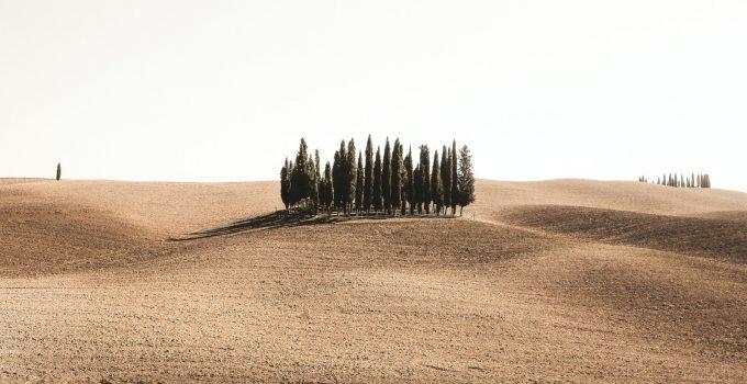 Photo by Cristina Gottardi on Unsplash